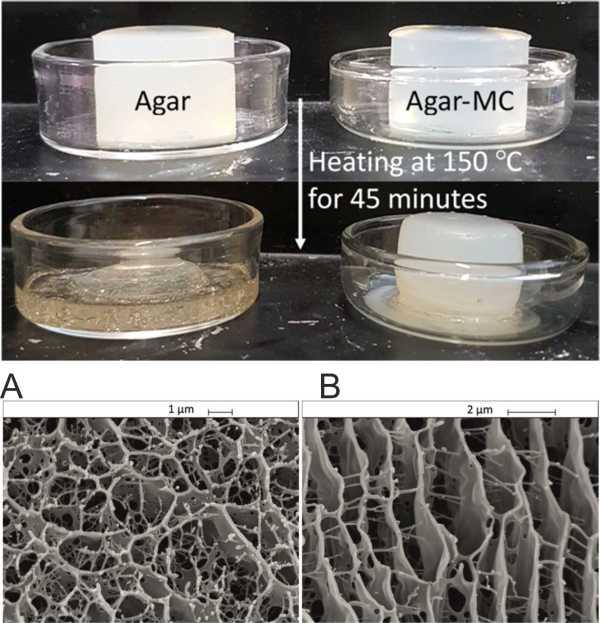 Agar-MC gels