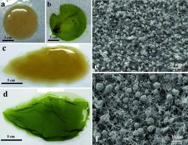 Artificial leaf-living soft matter
