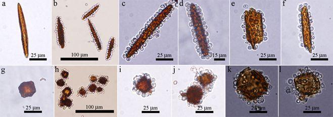 colloidosomes1