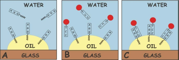 DNA surfactant on oil-water