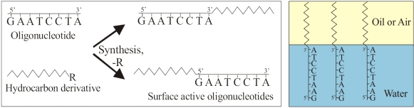 DNA surfactant
