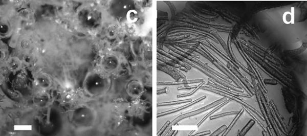 microrods stabilised foam