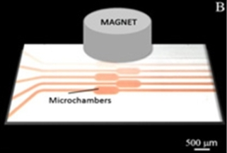 Microscreening with cells 1