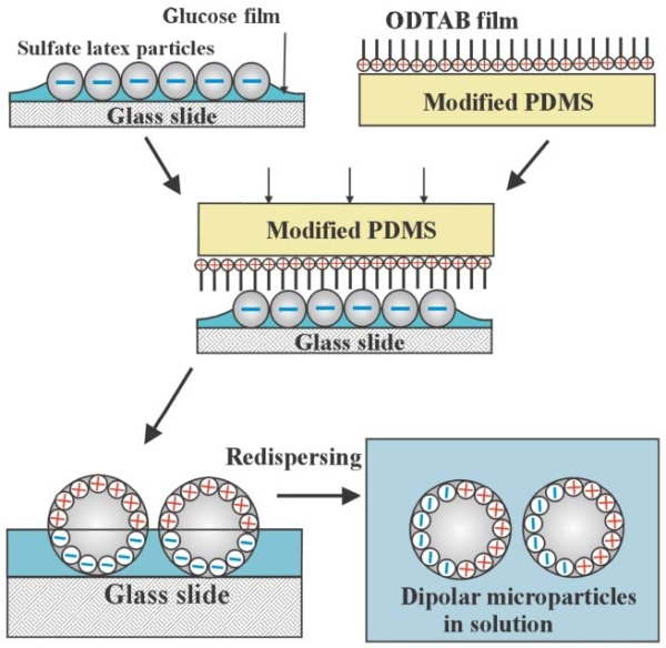 dipolar microparticles1