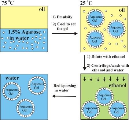 gel core colloidosomes1