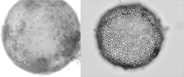 gel core colloidosomes2