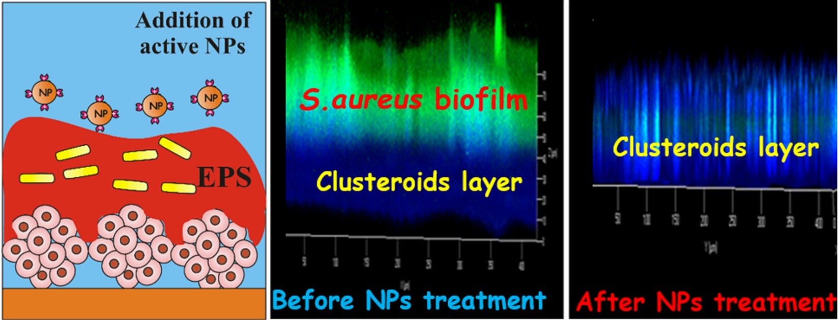 Biofilm infected clusteroids
